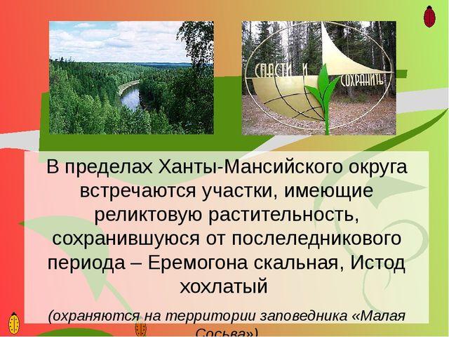В пределах Ханты-Мансийского округа встречаются участки, имеющие реликтовую р...