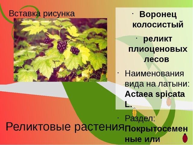 Реликтовые растения Воронец колосистый реликт плиоценовых лесов Наименования...