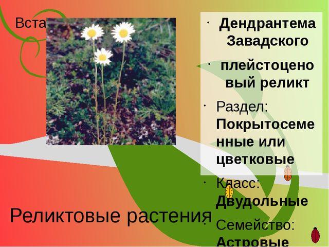 Реликтовые растения Дендрантема Завадского плейстоценовый реликт Раздел: Покр...