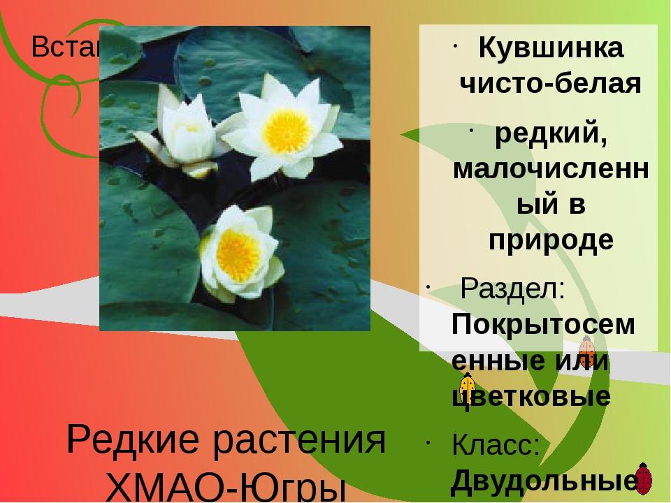 Редкие растения ХМАО-Югры Кувшинка чисто-белая редкий, малочисленный в природ...