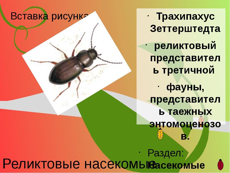 Реликтовые насекомые Трахипахус Зеттерштедта реликтовый представитель третичн...