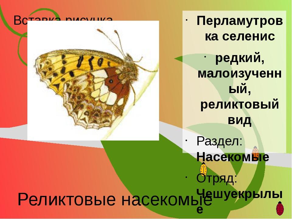 Реликтовые насекомые Перламутровка селенис редкий, малоизученный, реликтовый...