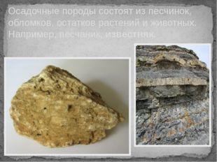 Осадочные породы состоят из песчинок, обломков, остатков растений и животных.