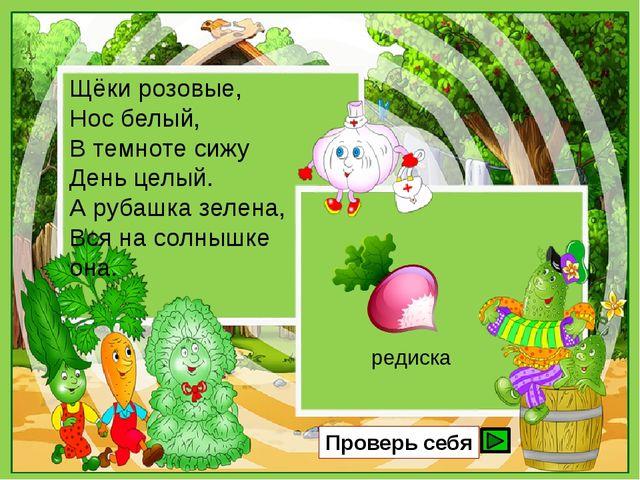 Щёки розовые, Нос белый, В темноте сижу День целый. А рубашка зелена, Вся на...