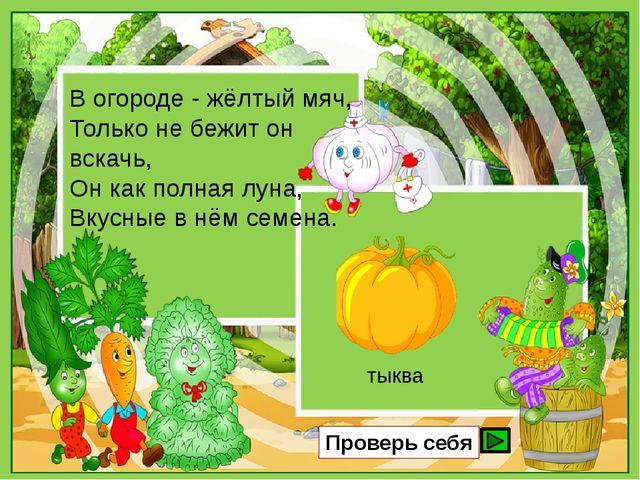 В огороде - жёлтый мяч, Только не бежит он вскачь, Он как полная луна, Вкусны...