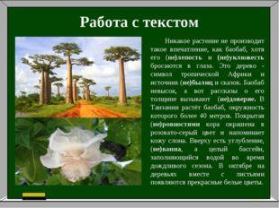 Работа с текстом Никакое растение не производит такое впечатление, как баобаб