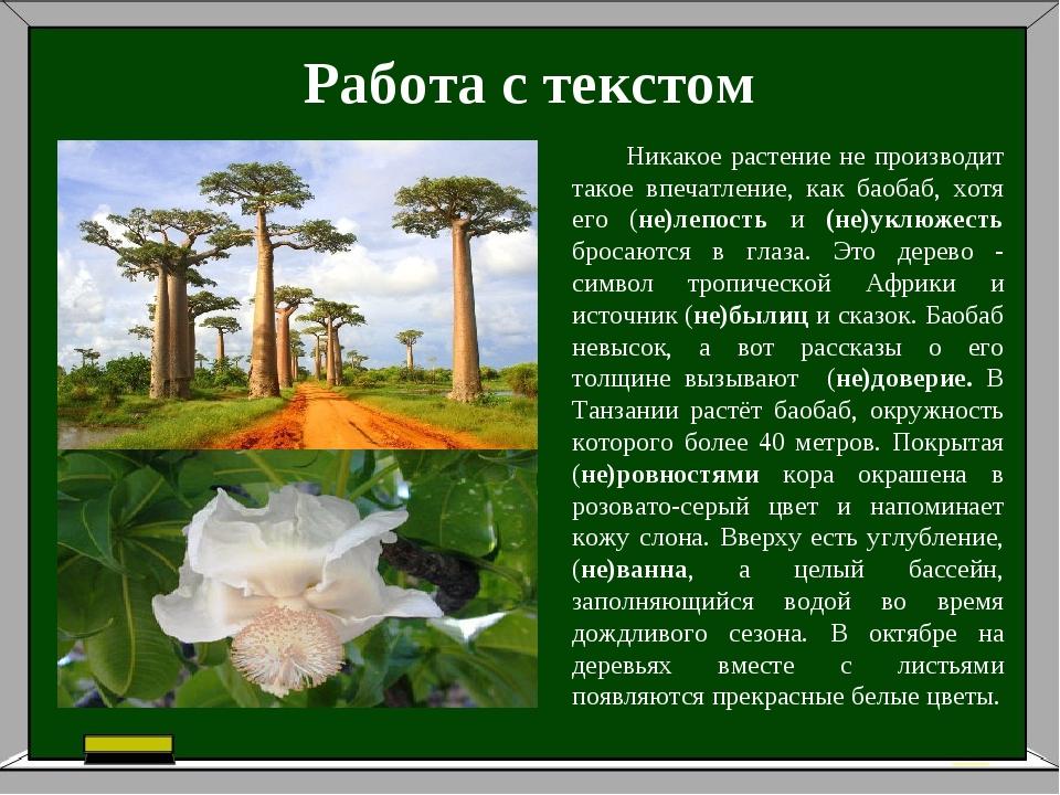Работа с текстом Никакое растение не производит такое впечатление, как баобаб...