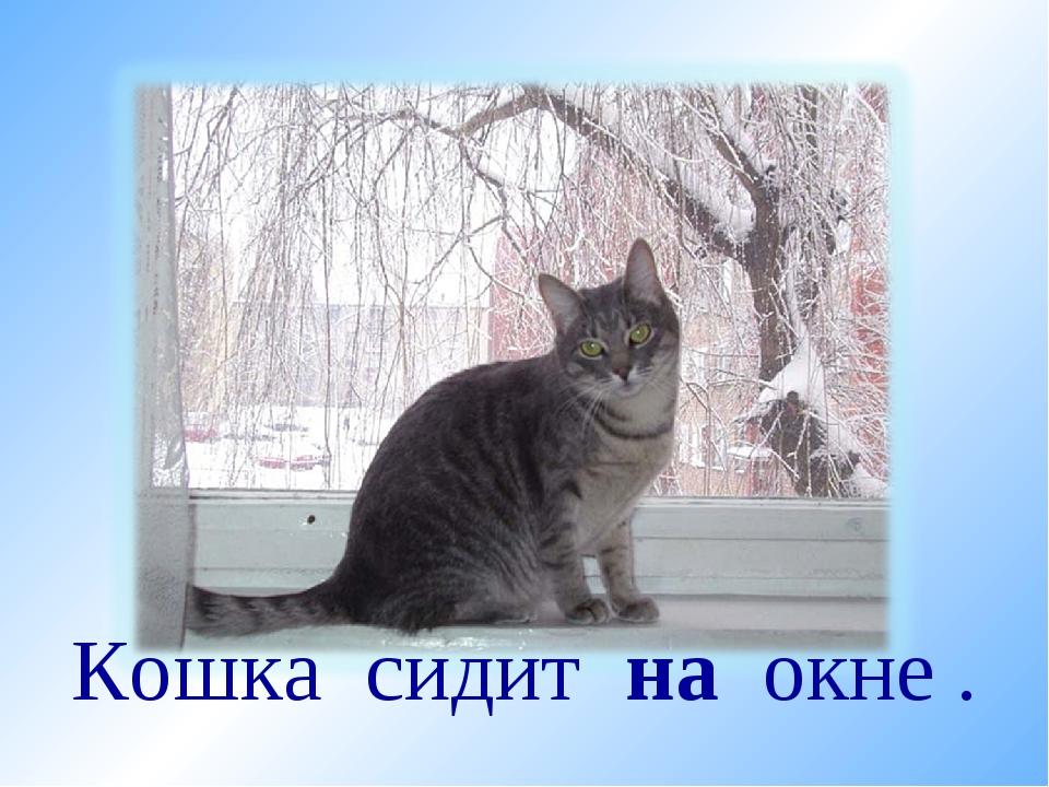 Кошка сидит на окне .