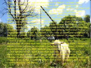 Ежелгі аңызға сенсек, найзағаймен алысқан Зевстің өзі Амалтея — тәңірлік ке