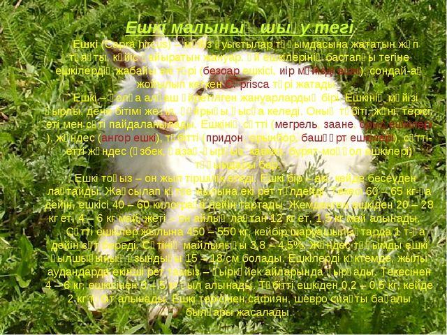 Ешкі малының шығу тегі Ешкі (Сapra hіrcus) – мүйіз қуыстылар тұқымдасына жата...