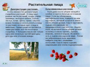 Растительная пища НАЗАД Дикорастущие растения.  В лесу множество дикорасту