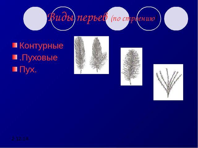 2.12.14 Виды перьев (по строению) Контурные .Пуховые Пух.