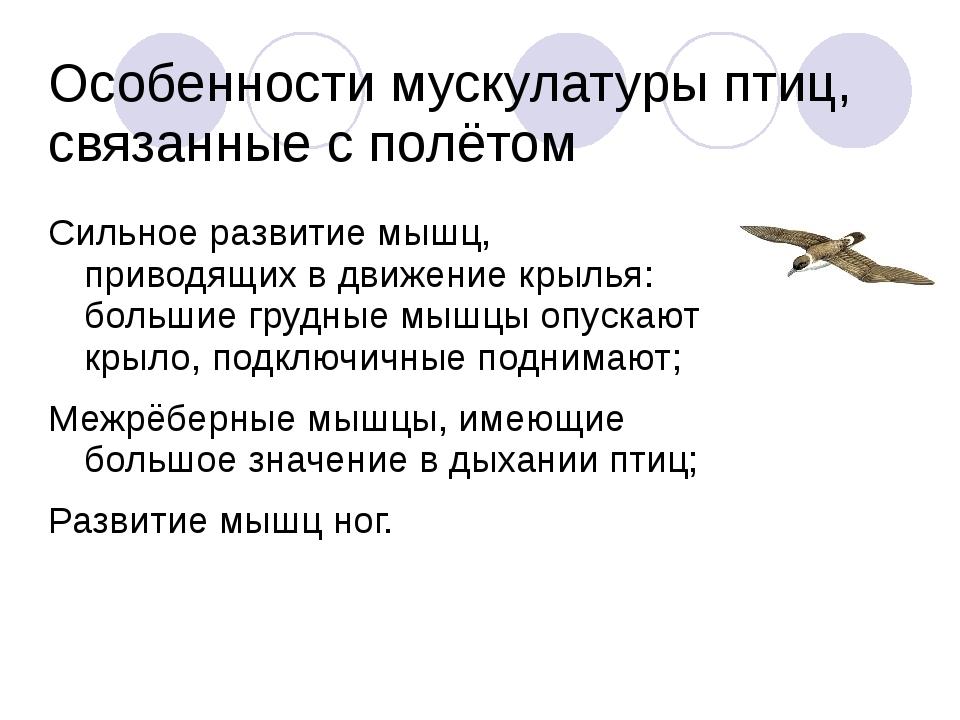 Особенности мускулатуры птиц, связанные с полётом Сильное развитие мышц, прив...