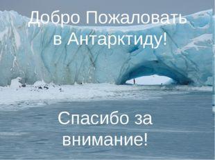 Добро Пожаловать в Антарктиду! Спасибо за внимание!