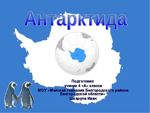 Подготовил ученик 4 «А» класса МОУ «Майская гимназия Белгородского района Бел...
