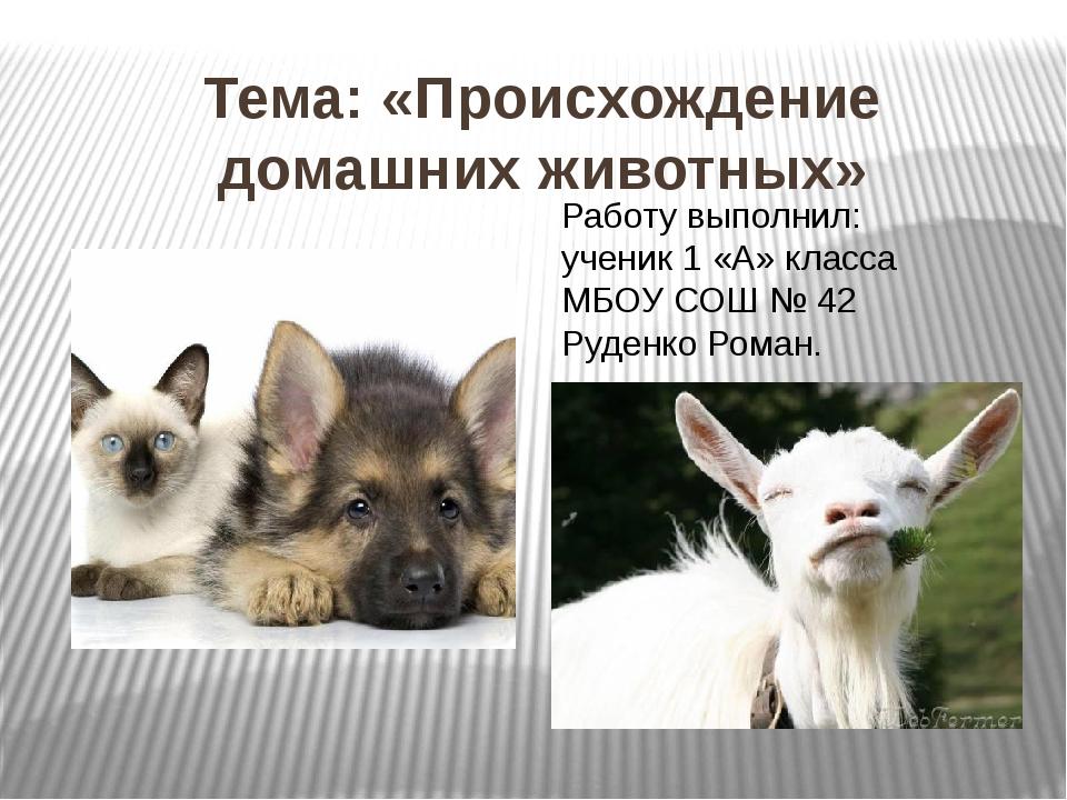 Тема: «Происхождение домашних животных» Работу выполнил: ученик 1 «А» класса...