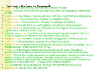 Болезни и вредители винограда Оидиум. Грибная болезнь, возбудитель Uncinula n