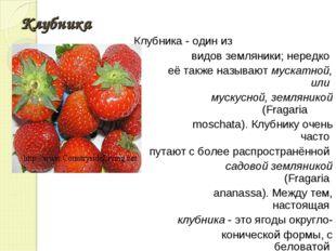 Клубника Клубника - один из видов земляники; нередко её также называют мускат