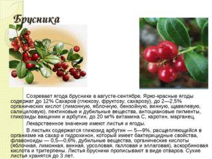 Брусника Созревает ягода брусники в августе-сентябре. Ярко-красные ягоды соде