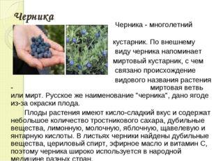 Черника Черника - многолетний кустарник. По внешнему виду черника напоминает