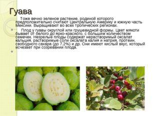 Гуава Тоже вечно зеленое растение, родиной которого предположительно считают