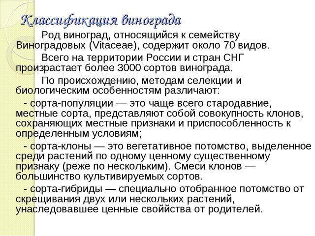 Классификация винограда Род виноград, относящийся к семейству Виноградовых (V...