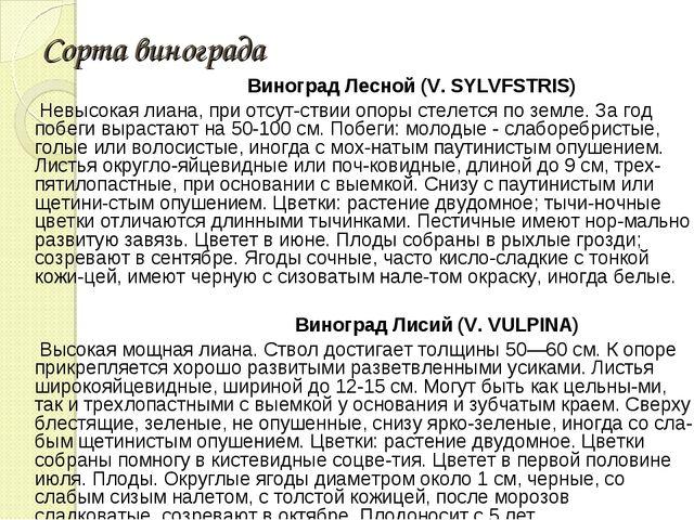 Сорта винограда Виноград Лесной (V. SYLVFSTRIS) Невысокая лиана, при отсутст...