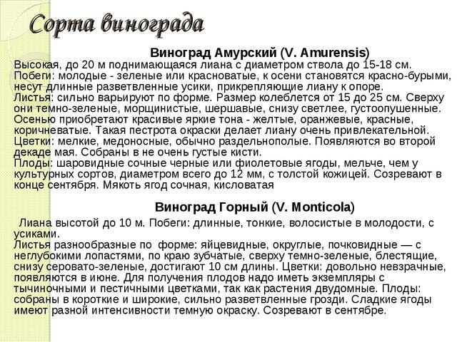 Сорта винограда Виноград Амурский (V. Amurensis) Высокая, до 20 м поднимающая...
