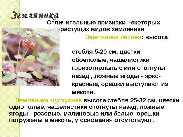 Земляника Отличительные признаки некоторых дикорастущих видов земляники Земля...
