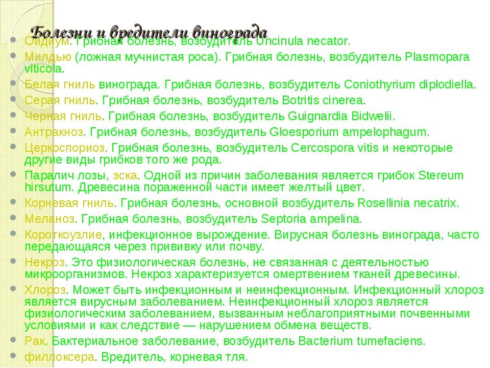 Болезни и вредители винограда Оидиум. Грибная болезнь, возбудитель Uncinula n...