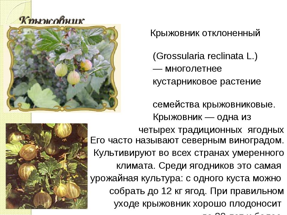 Крыжовник Крыжовник отклоненный (Grossularia reclinata L.) — многолетнее куст...