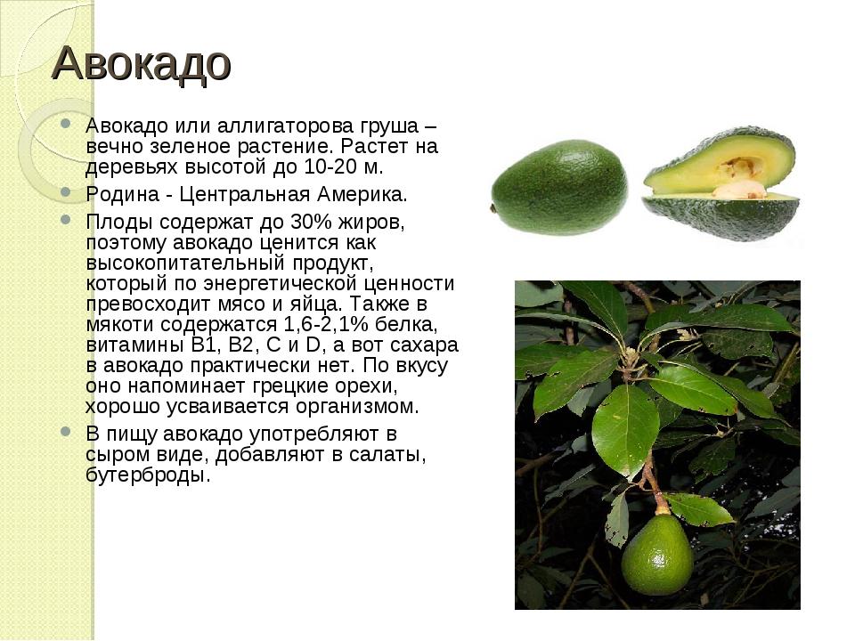 Польза авокадо для женщин сколько есть