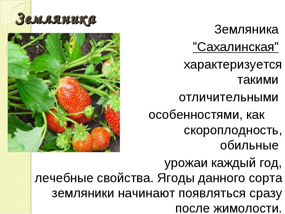 """Земляника Земляника """"Сахалинская"""" характеризуется такими отличительными особе..."""
