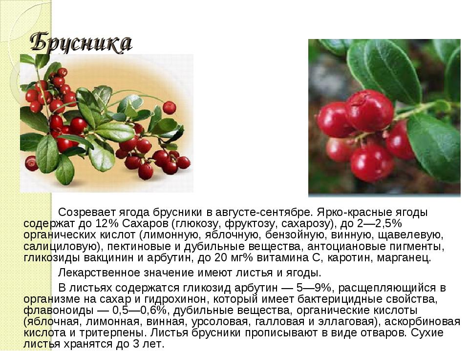 Брусника Созревает ягода брусники в августе-сентябре. Ярко-красные ягоды соде...