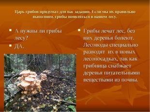 Царь грибов придумал для нас задания. Если мы их правильно выполним, грибы по
