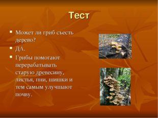 Тест Может ли гриб съесть дерево? ДА. Грибы помогают перерабатывать старую др