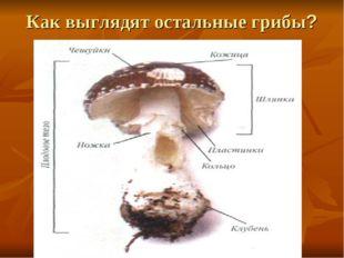 Как выглядят остальные грибы?
