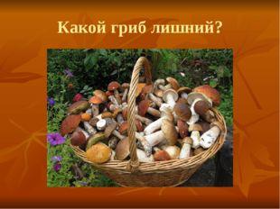 Какой гриб лишний?