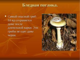 Бледная поганка. Самый опасный гриб. Её яд сохраняется даже после длительной
