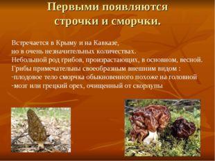 Первыми появляются строчки и сморчки. Встречается в Крыму и на Кавказе, но в
