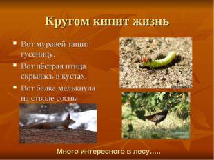 Кругом кипит жизнь Вот муравей тащит гусеницу. Вот пёстрая птица скрылась в к