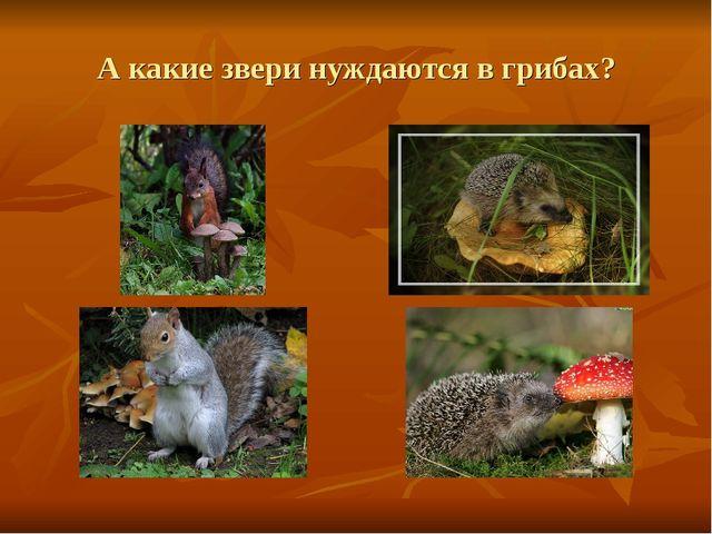 А какие звери нуждаются в грибах?