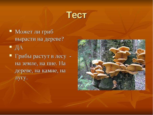 Тест Может ли гриб вырасти на дереве? ДА Грибы растут в лесу - на земле, на п...