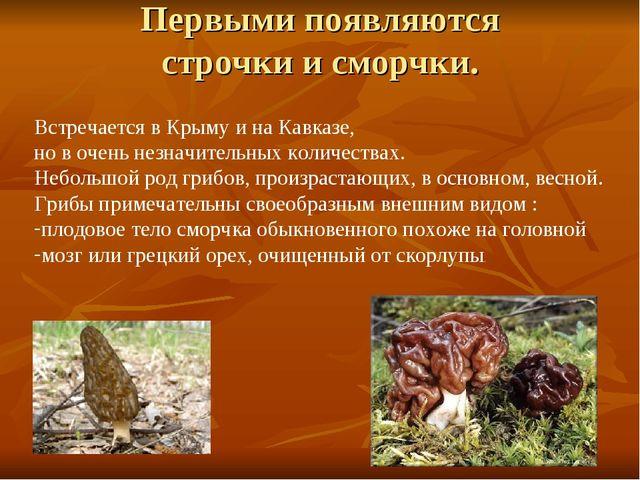 Первыми появляются строчки и сморчки. Встречается в Крыму и на Кавказе, но в...