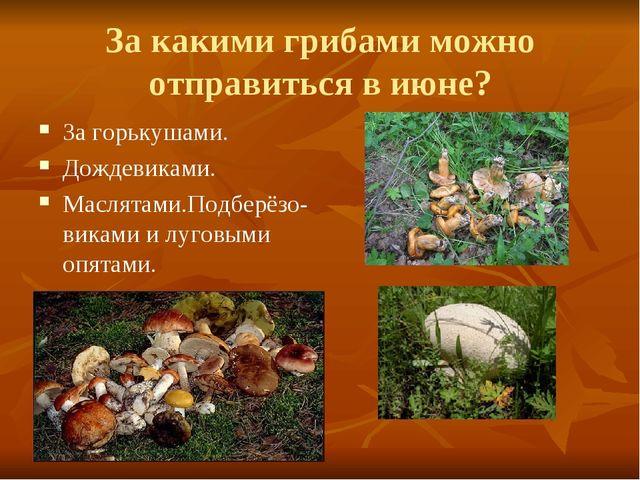 За какими грибами можно отправиться в июне? За горькушами. Дождевиками. Масля...