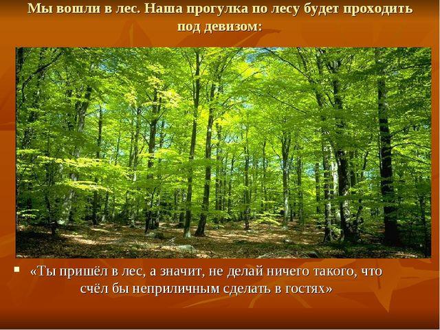 Мы вошли в лес. Наша прогулка по лесу будет проходить под девизом: «Ты пришёл...