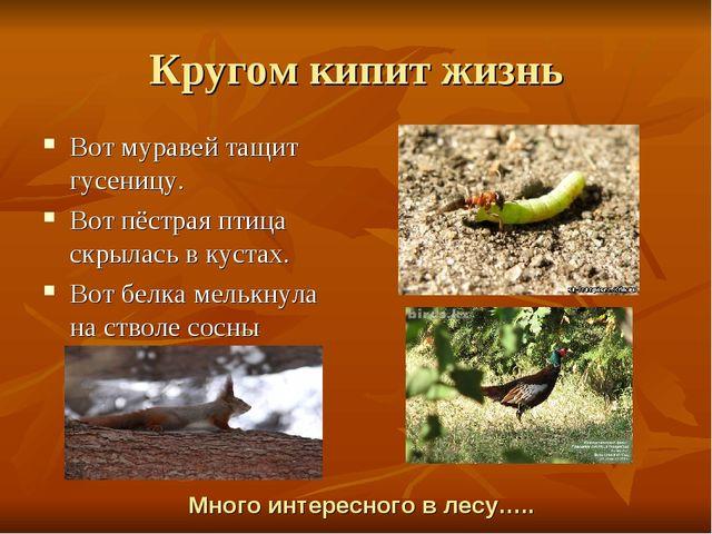 Кругом кипит жизнь Вот муравей тащит гусеницу. Вот пёстрая птица скрылась в к...