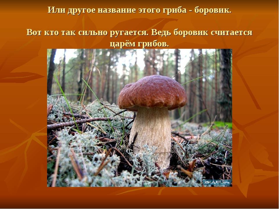 Или другое название этого гриба - боровик. Вот кто так сильно ругается. Ведь...