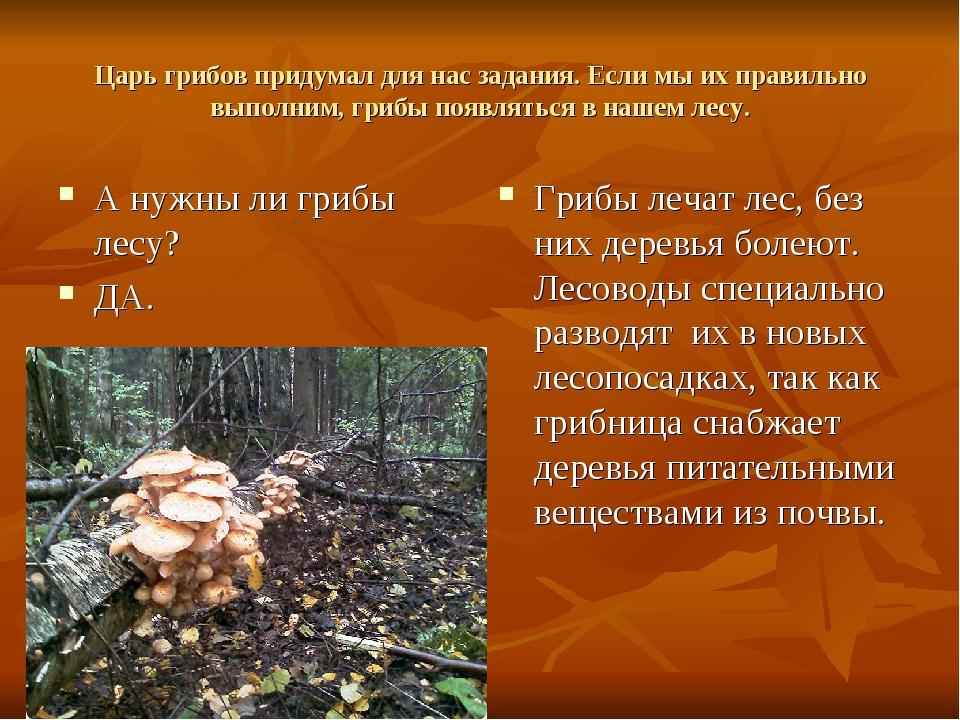 Царь грибов придумал для нас задания. Если мы их правильно выполним, грибы по...