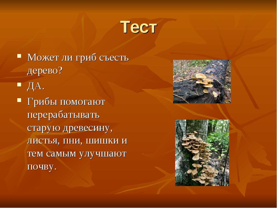 Тест Может ли гриб съесть дерево? ДА. Грибы помогают перерабатывать старую др...